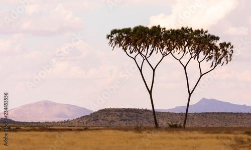Abenddämmerung im Samburu Nationalpark, Kenia