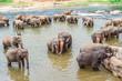 hugging elephants in the river in Pinnawella - 234457506