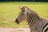Zebra © andreas