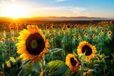 Sunny Sunflowers, San Luis Obispo, CA © Mark