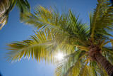Bright summer sun flare through palm tree leaves