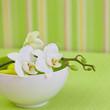 Zen style orchid flower still life