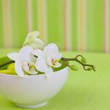 Zen style orchid flower still life © Sunnydays