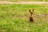 dog sitting on the grass