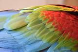 Fototapeta Rainbow - ara zielonoskrzydła © Olga Korowacka
