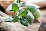 Fresh sage leaf - 234613169