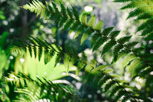 Lush tropical jungle rainforest scene with palms, ferns, tropical plants alive and green in Malaysia