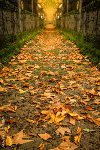 magical autumn in nature