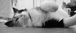 jeune chatte jouant tout en étant allongée exprimant comfort et bien-être - 234632759