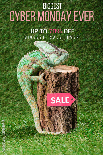 fototapeta na ścianę beautiful bright green chameleon climbing on stump with sale tag and cyber monday ever