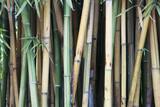 Bamboo background  © viktor2013