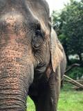 Elephant portrait close-up