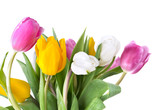 beautiful and colorful bouquet of tulips on white background © coco