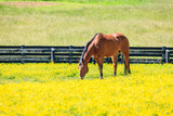 Horse on a pasture - 234690345
