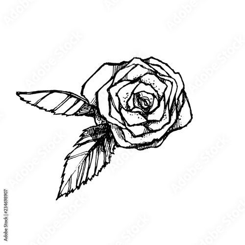 Hand drawn black and white rose isolated on white background. Graphic element. Floral form.