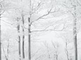 Winter in beech forest - 234712598