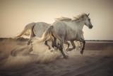 Camargue horses © Anton Rostovsky