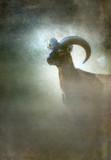 Mouflon ram in mist. Old master painting style. - 234738715