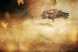 Buzzard on branch in autumn storm. Old master painting style. - 234738764