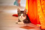 Pet animal; cute cat indoor. House cat. © Esin Deniz