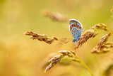 Beatiful butterfly in nature, close up photo.