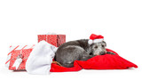 Tired Santa Claus Dog With Christmas Presents