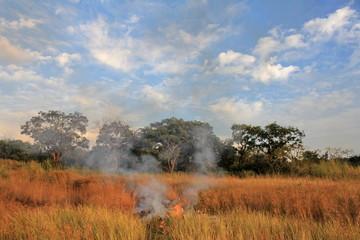 savannah in dry season