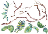 Watercolor set of branches and leaves, natural botanical elements6 - 234764541