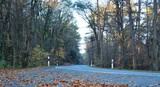 Straße Weg Herbst Laub