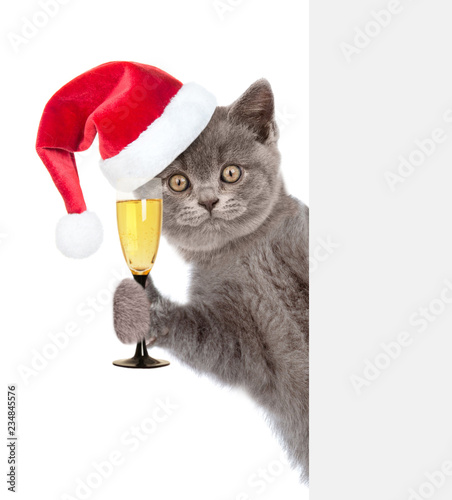 Cat in red christmas hat holding glass of champagne and peeking behind white banner. isolated on white background