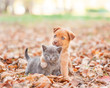Leinwanddruck Bild - homeless puppy hugging a sad kitten on autumn leaves