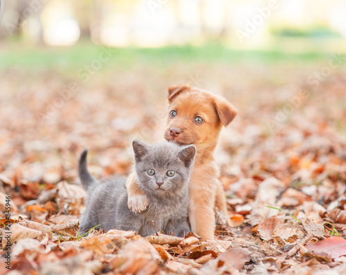 Leinwanddruck Bild homeless puppy hugging a sad kitten on autumn leaves
