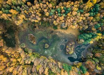 Herbstwald mit kleinem, ausgetrocknetem See aus der Vogelperspektive - Luftaufnahme