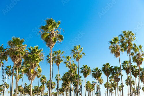travel, tourism and summer holidays concept - palm trees at venice beach, california