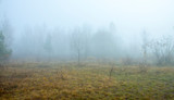 Misty morning on the forest. Beautiful autumn trees on a fog. The trail on a meadow. Frozen grass.