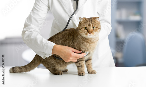 Veterinarian cat hospital checkup - 234914321