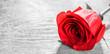 Quadro Red rose on wood