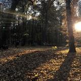 Belles couleurs de l'automne  - 234927357