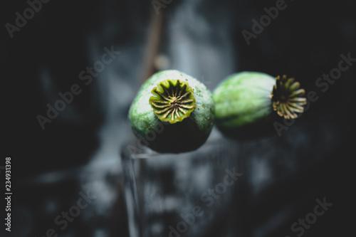 Green Flower - 234931398