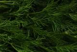 Duck texture close up - 234935309