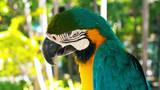 blue and yellow macaw // A blue and yellow macaw closeup
