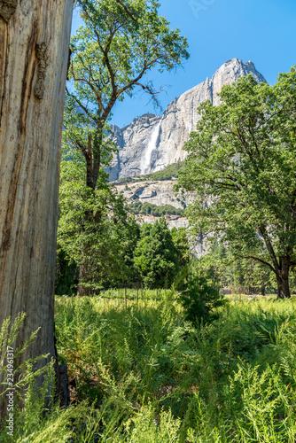 grüne wald- und wiesenlandschaft mit baumstamm und wasserfall im hintergrund Yosemite National Park, Kalifornien, USA - 234961317