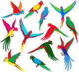 Vector colorful jungle parrot set