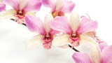 The pink orchid flower on a white background. © supaleka