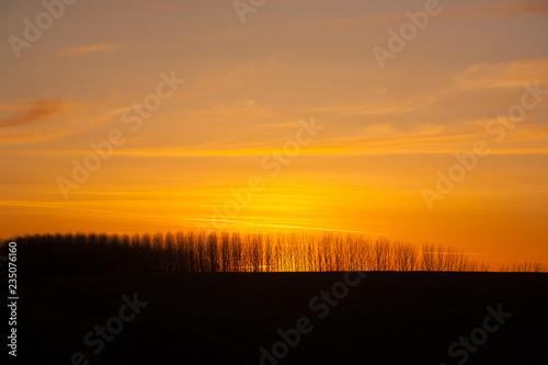 fototapeta na ścianę sunset over field