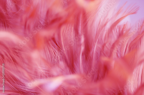 Blur Bird chickens feather texture for background, Fantasy, Abstract, soft color of art design. - 235102701