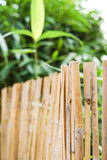 Bamboo texture fence. Bamboo background with green shoot. Copy space. Pattern © Anna