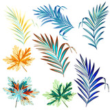 Collection of colorful palm leaves for design - 235108797