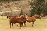 Grupo de caballos sueltos en el campo. © Lola Fdez. Nogales