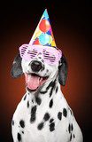 Dalmatian dog in party cone and pink glasses